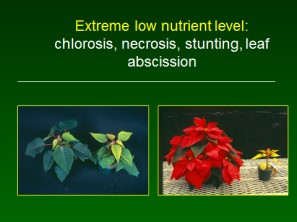 Extreme low nutrient level