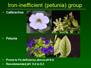 Iron-inefficient (petunia) group